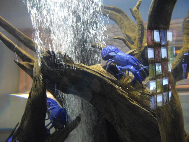 2011年 夏旅行 ~夢が一つ叶いました@鳥羽水族館~_d0104926_6272648.jpg