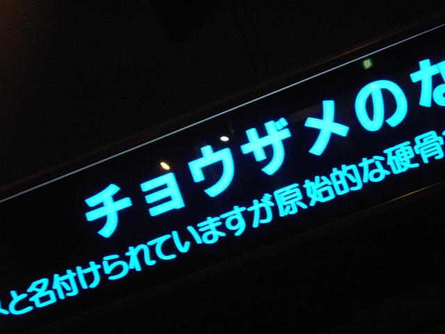 2011年 夏旅行 ~夢が一つ叶いました@鳥羽水族館~_d0104926_630713.jpg