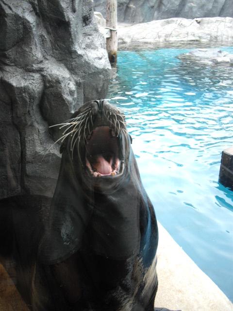 2011年 夏旅行 ~夢が一つ叶いました@鳥羽水族館~_d0104926_631494.jpg