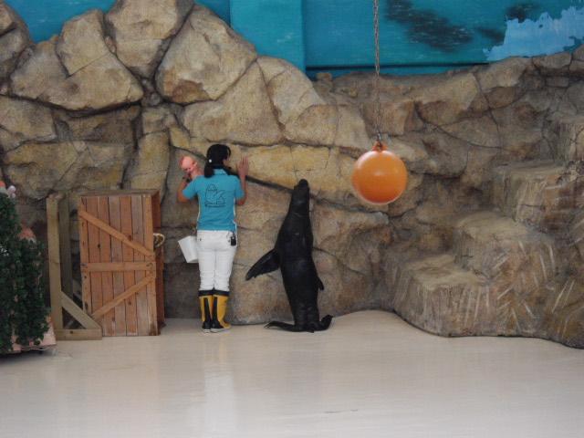 2011年 夏旅行 ~夢が一つ叶いました@鳥羽水族館~_d0104926_6393649.jpg