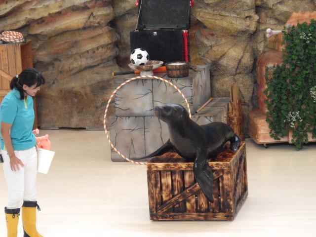 2011年 夏旅行 ~夢が一つ叶いました@鳥羽水族館~_d0104926_6402574.jpg