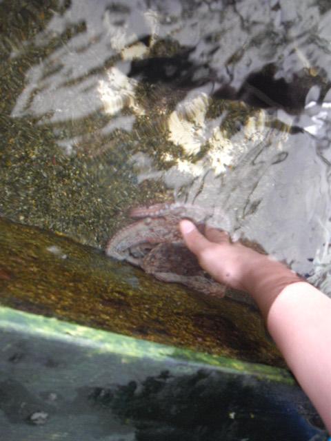 2011年 夏旅行 ~夢が一つ叶いました@鳥羽水族館~_d0104926_6433417.jpg