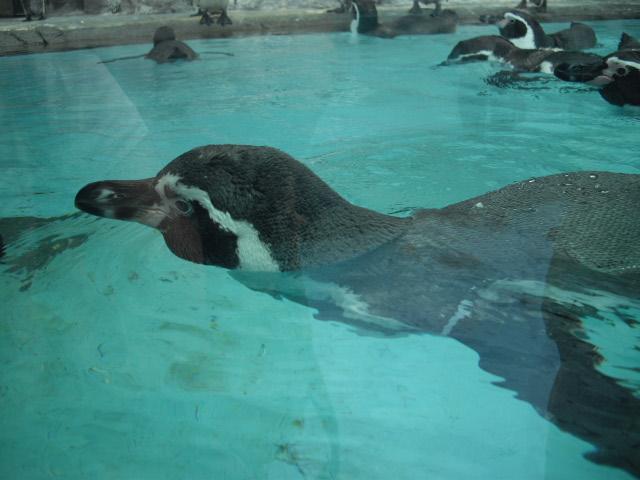 2011年 夏旅行 ~夢が一つ叶いました@鳥羽水族館~_d0104926_6464591.jpg