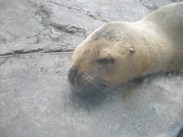 2011年 夏旅行 ~夢が一つ叶いました@鳥羽水族館~_d0104926_6472066.jpg
