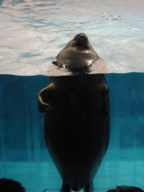 2011年 夏旅行 ~夢が一つ叶いました@鳥羽水族館~_d0104926_648010.jpg