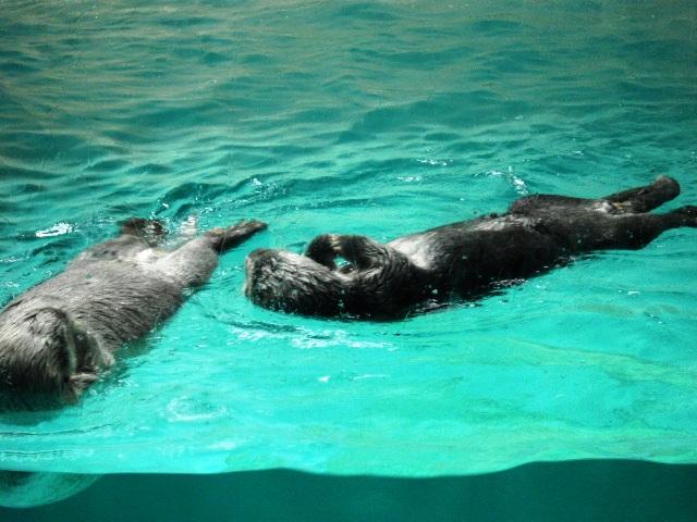 2011年 夏旅行 ~夢が一つ叶いました@鳥羽水族館~_d0104926_6512927.jpg