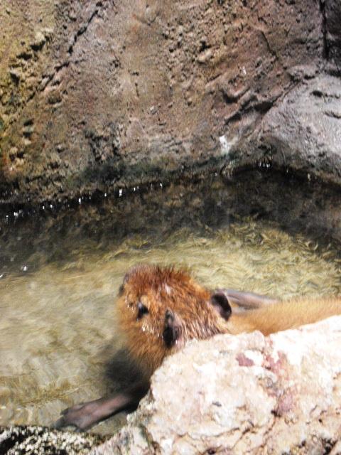2011年 夏旅行 ~夢が一つ叶いました@鳥羽水族館~_d0104926_6522963.jpg
