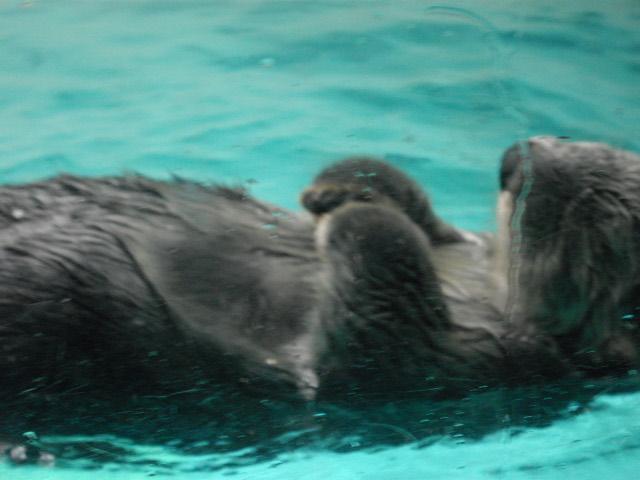 2011年 夏旅行 ~夢が一つ叶いました@鳥羽水族館~_d0104926_652456.jpg