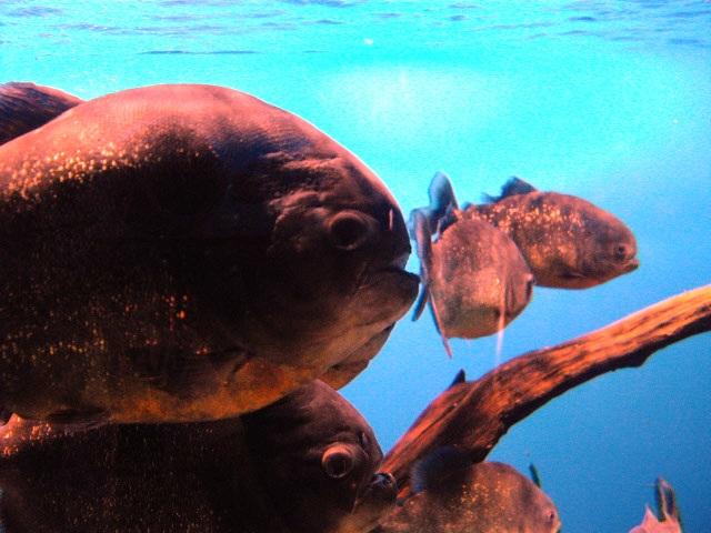 2011年 夏旅行 ~夢が一つ叶いました@鳥羽水族館~_d0104926_654866.jpg