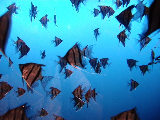 2011年 夏旅行 ~夢が一つ叶いました@鳥羽水族館~_d0104926_6553134.jpg