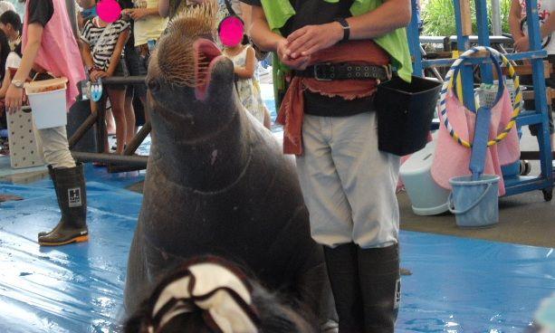 2011年 夏旅行 ~夢が一つ叶いました@鳥羽水族館~_d0104926_738582.jpg