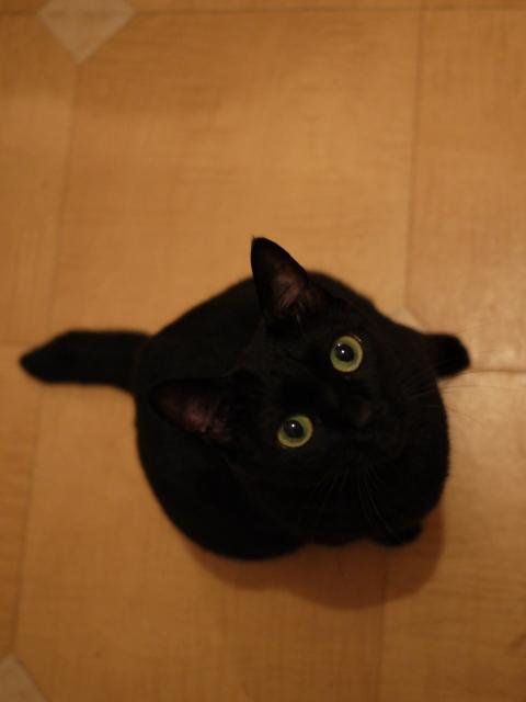 ぱちくり猫 のぇる編。_a0143140_2304055.jpg