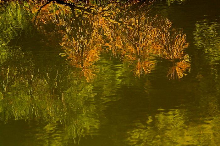 ■■ 水面に初秋の筆おろし ■■_c0195662_22195564.jpg