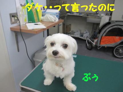 b0193480_1624395.jpg