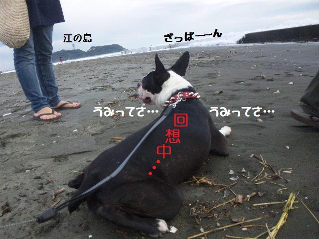 ★はなこはんに逢いに湘南へ  海遊び編★_d0187891_22164762.jpg