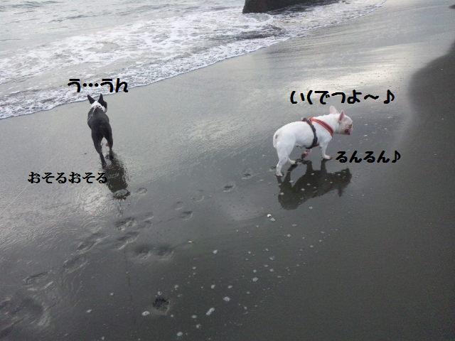 ★はなこはんに逢いに湘南へ  海遊び編★_d0187891_22165687.jpg