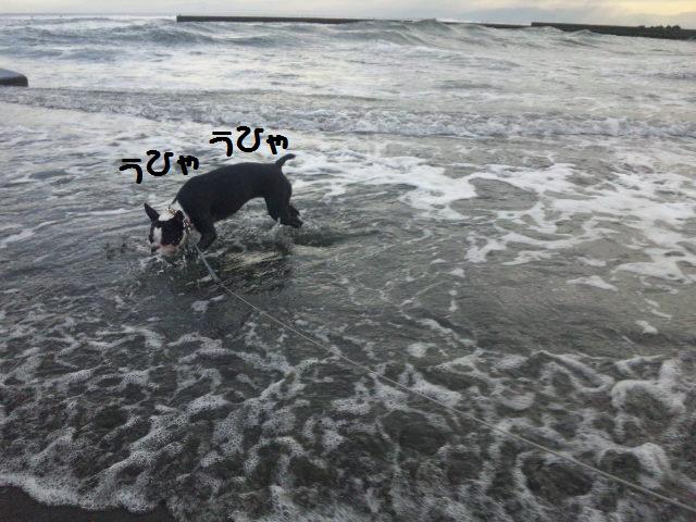 ★はなこはんに逢いに湘南へ  海遊び編★_d0187891_22171488.jpg