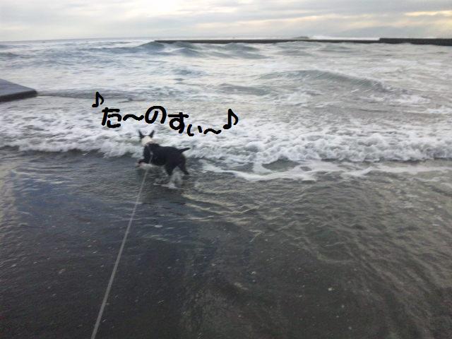 ★はなこはんに逢いに湘南へ  海遊び編★_d0187891_22173625.jpg