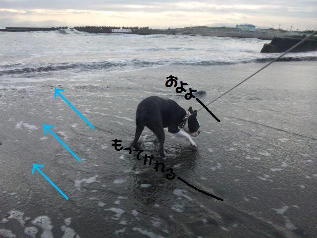 ★はなこはんに逢いに湘南へ  海遊び編★_d0187891_2217752.jpg