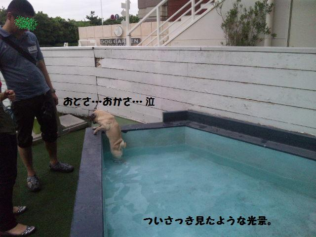 ★はなこはんに逢いに湘南へ  海遊び編★_d0187891_22183485.jpg
