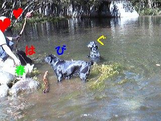 初泳ぎ_f0148927_22485411.jpg