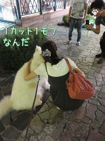 台湾祭り_c0062832_5211852.jpg