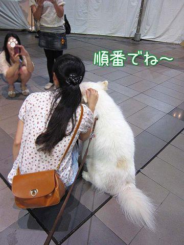 台湾祭り_c0062832_521222.jpg