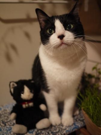 ちっちゃい白黒猫 空編。_a0143140_23111623.jpg