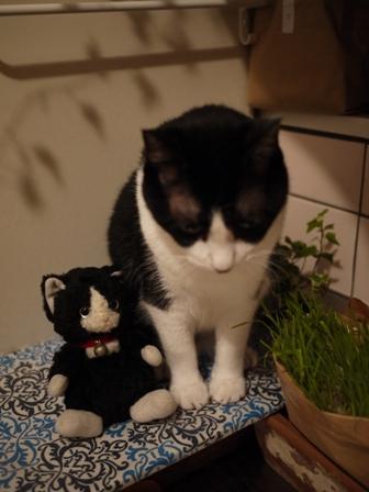 ちっちゃい白黒猫 空編。_a0143140_2312722.jpg