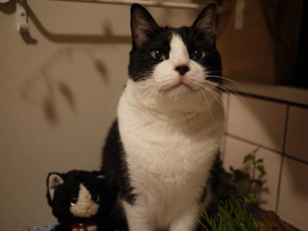 ちっちゃい白黒猫 空編。_a0143140_2314295.jpg