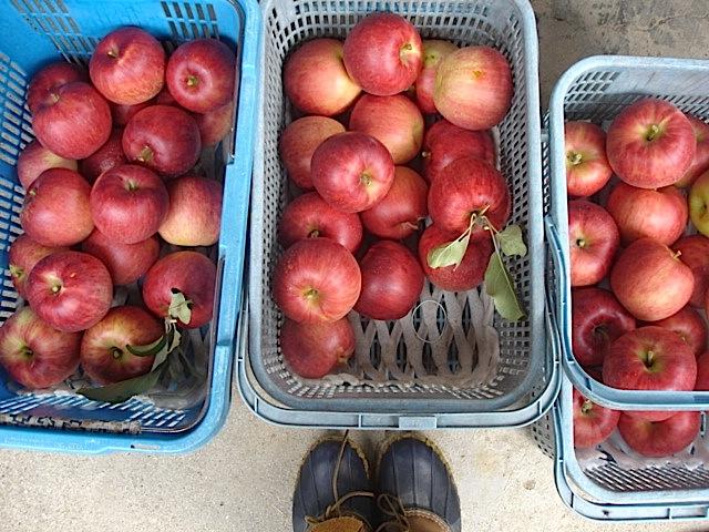 収穫2_e0019167_21213852.jpg