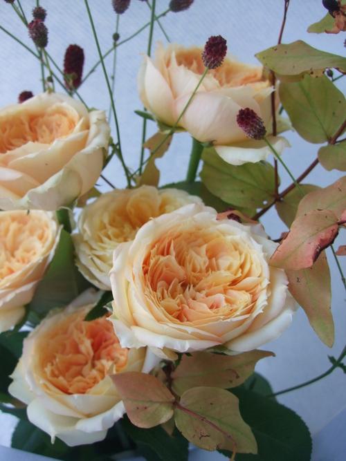 オークリーフ(キャラメルアンティークの花束)_f0049672_16122289.jpg
