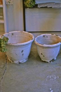 今週の鉢物さん_b0209477_18153086.jpg