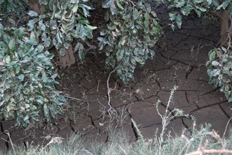 水害の後       _d0141987_9512666.jpg