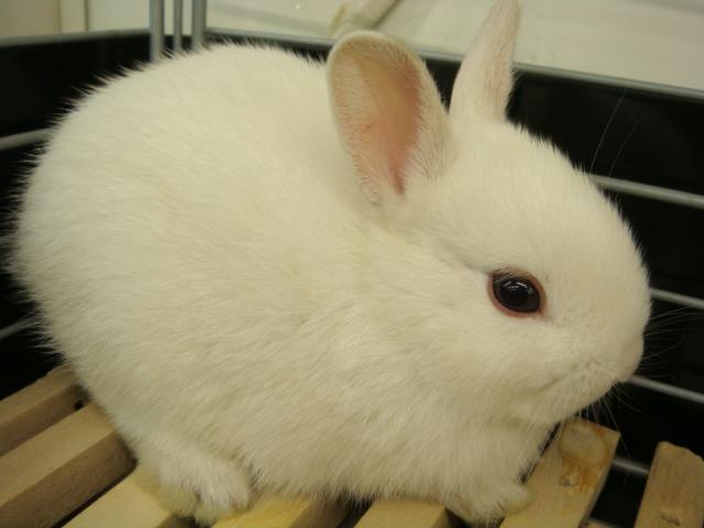 ウサギ・モルモット・ハリネズミ・インコ・ホワイトプレーリードック_f0189122_14145867.jpg