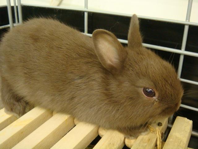 ウサギ・モルモット・ハリネズミ・インコ・ホワイトプレーリードック_f0189122_14153517.jpg