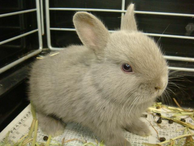 ウサギ・モルモット・ハリネズミ・インコ・ホワイトプレーリードック_f0189122_14161045.jpg