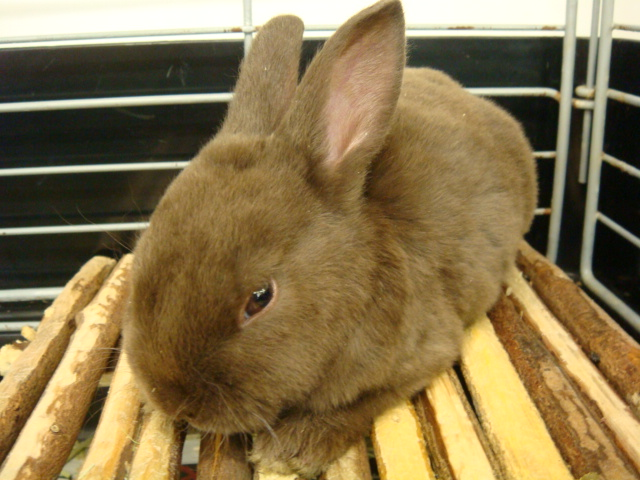 ウサギ・モルモット・ハリネズミ・インコ・ホワイトプレーリードック_f0189122_14165485.jpg