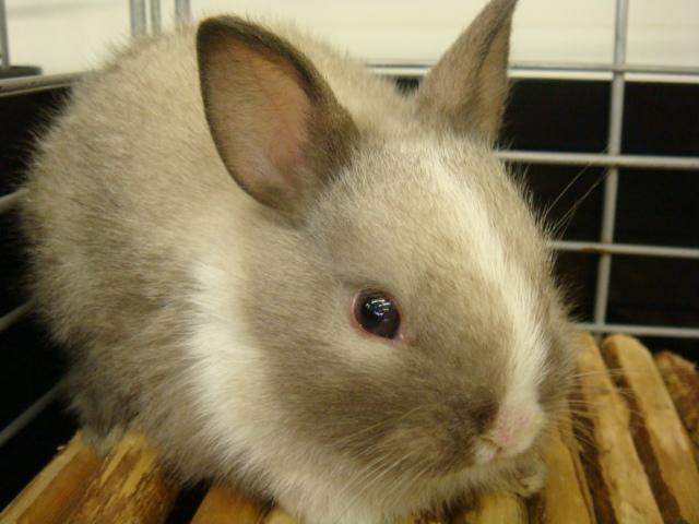 ウサギ・モルモット・ハリネズミ・インコ・ホワイトプレーリードック_f0189122_14174444.jpg