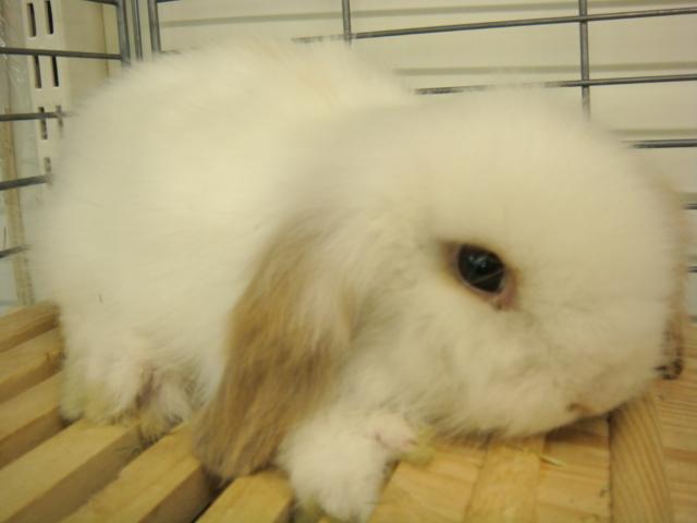 ウサギ・モルモット・ハリネズミ・インコ・ホワイトプレーリードック_f0189122_14185697.jpg