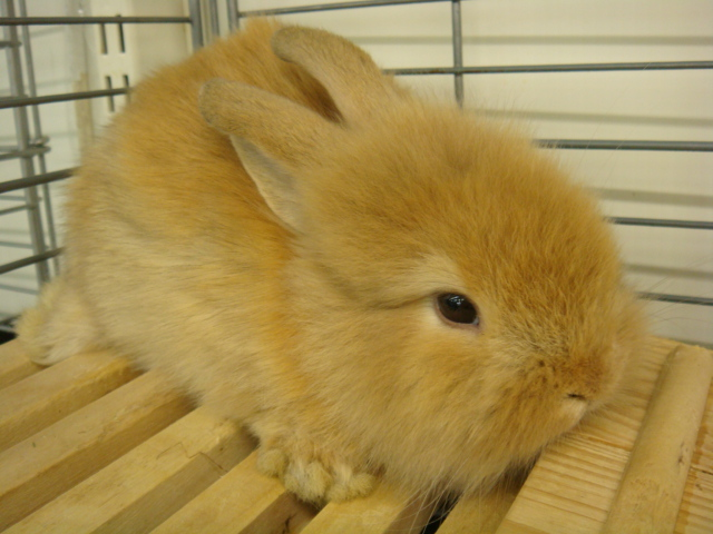 ウサギ・モルモット・ハリネズミ・インコ・ホワイトプレーリードック_f0189122_14193493.jpg