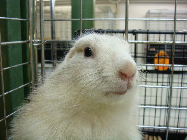 ウサギ・モルモット・ハリネズミ・インコ・ホワイトプレーリードック_f0189122_14461945.jpg