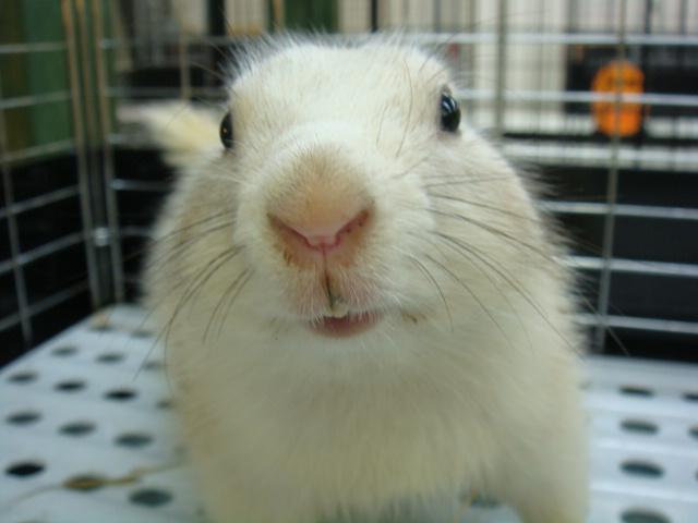 ウサギ・モルモット・ハリネズミ・インコ・ホワイトプレーリードック_f0189122_14503148.jpg