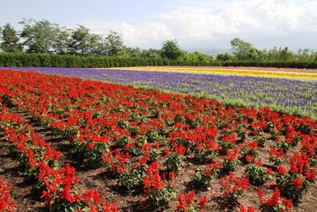 花と動物と肉と。(北海道旅行③)_b0128954_1304368.jpg