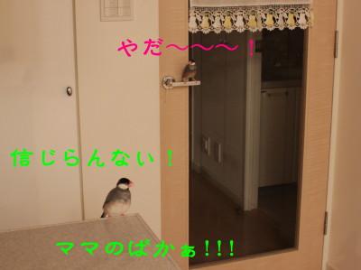 b0158061_21355043.jpg