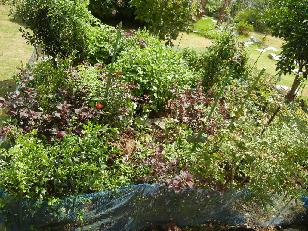 2011年9月9日(金)夏の終わりの庭!_f0060461_10454056.jpg