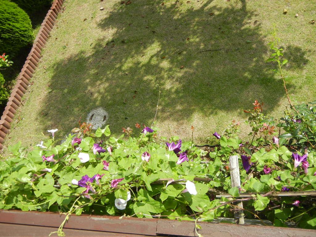 2011年9月9日(金)夏の終わりの庭!_f0060461_1232159.jpg