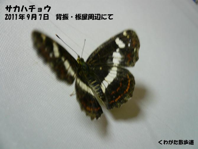 f0183484_0411555.jpg