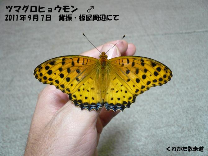 f0183484_0413895.jpg