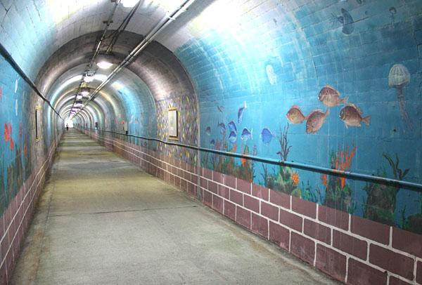 鴨川のトンネル水族館_b0114798_9403543.jpg